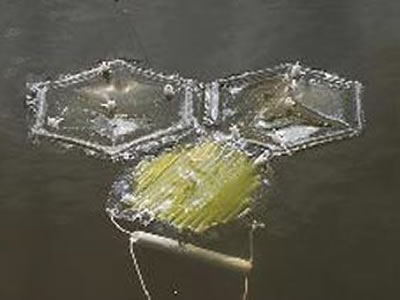 semi permeable plastic bags for algae harvesting