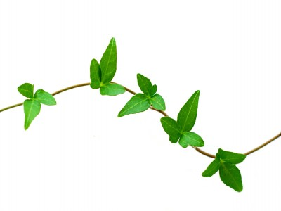Greening Your Company's Procurement