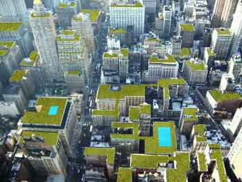 Green Roofs are Starting To Sprout in American Cities