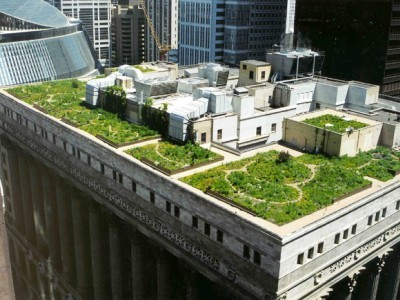 Chicago green roof summer 2004